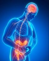 L'intestin : pourquoi est-il le deuxième cerveau ?